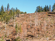 forest clearcut hillside in Klickitat County, WA, USA