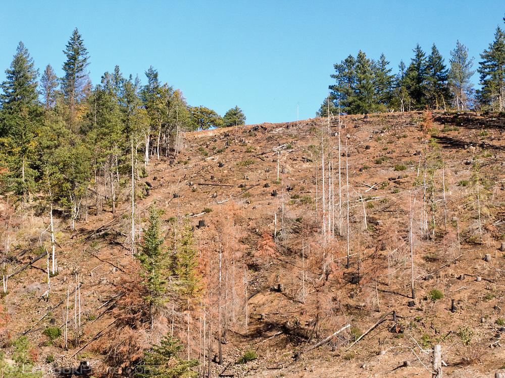 forest clearcut hillside in Klickitat County, WA, USA