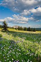Trophy Meadows, Wells Gray Provincial Park British Columbia Canada