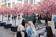 Shoppers return to the exclusive shopping area on Bond Street passing fake cherry blossom trees as non-essential shops reopen and the national coronavirus lockdown three eases on 15th April 2021 in London, United Kingdom. Now that the roadmap for coming out of the national lockdown has been laid out, this is the first phase of the easing of restrictions, and large numbers of people are out in Londons retail district laden with shopping bags.