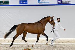 325, Napoleon SW<br /> KWPN Hengstenkeuring 2021<br /> © Hippo Foto - Dirk Caremans<br />  05/02/2021