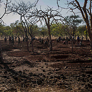 In the middle of a forest in a secret region, Sudanese men dig down the plains of South Kordofan to find gold. A gram of gold is worth 500 SSP (about 100 euros), the workers find between 250 and 700 grams a day. South Kordofan is a region rich in natural resources.