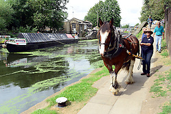 © Licensed to London News Pictures. 23/08/2012. London, UK Ilkeston, a restored narrowboat, is towed by a horse, Buddy, a 13-year-old Clydesdale, across London's canal network, on its way to the London Canal Museum. It has journeyed from Ellesmere Port in Cheshire, through more than 100 locks, to London to celebrate its 100th birthday.. Photo credit : Stephen Simpson/LNP