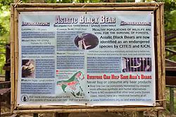 Asiatic Black Bear Sign