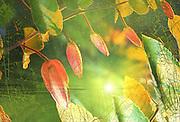 EPSON scanner image nature photography,nature photographers,risdon photography