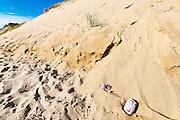 Litter by huge sand dune cliffs along Long Nook Beach, Cape Cod National Seashore, Truro, Cape Cod, MA, USA