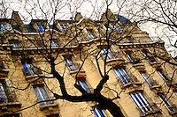 Leafless tree stands in street in Paris, France