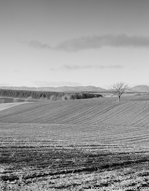 Lone tree, blackandwhite, winter<br /> *ADD TO CART FOR LICENSING OPTIONS*