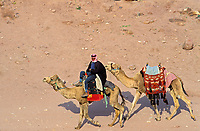 Jordanie - Chamelier à Petra