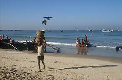 Beach scene in Goa; India; with fisherman carrying baskets of fish and birds trying to steal fish,