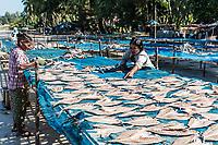 NGAPALI, MYANMAR - DECEMBER 14, 2016 : fish drying at Ngapali Beach Rakhine state in Myanmar (Burma)