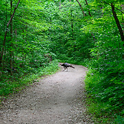 Blendon Woods Metro Park