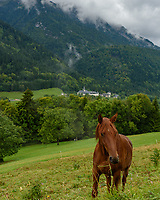 A horse grazes near the Abbey of Tamie on a rainy day.