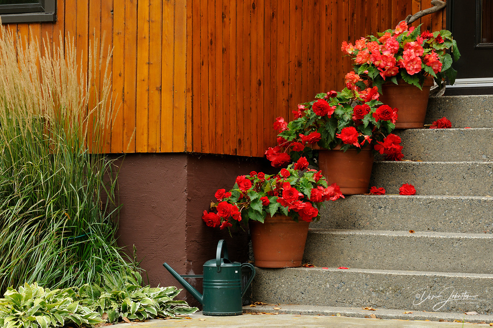 Potted begonias on a staircase, Greater Sudbury, Ontario, Canada