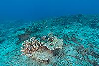 Reef in Seychelles