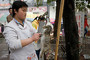 Chinese chef skins dead rabbit to cook for restaurant customers at Bao Ding in Dazu County, Chongqing, China