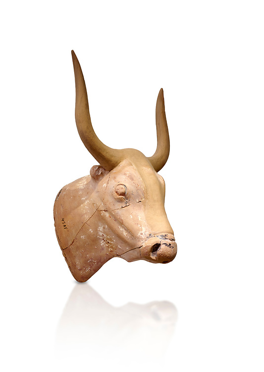 The Minoan clay bull's head rhython lbation vessel,  Palaikastro 1500-1450 BC; Heraklion Archaeological  Museum, white background .<br /> <br /> If you prefer to buy from our ALAMY PHOTO LIBRARY  Collection visit : https://www.alamy.com/portfolio/paul-williams-funkystock/minoan-art-artefacts.html . Type -   Heraklion   - into the LOWER SEARCH WITHIN GALLERY box. Refine search by adding background colour, place, museum etc<br /> <br /> Visit our MINOAN ART PHOTO COLLECTIONS for more photos to download  as wall art prints https://funkystock.photoshelter.com/gallery-collection/Ancient-Minoans-Art-Artefacts-Antiquities-Historic-Places-Pictures-Images-of/C0000ricT2SU_M9w