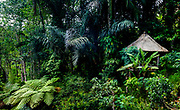 Green tropical forest with a small roofed hut.