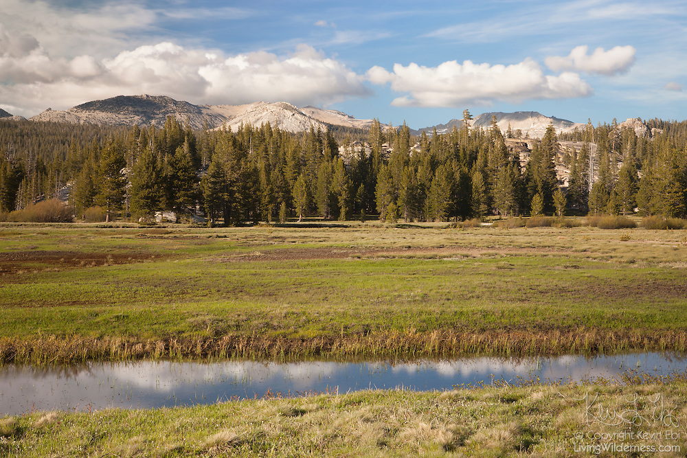 Cumulus clouds are reflected in a narrow channel of water in the Tuolumne Meadows of Yosemite National Park, California. Ragged Peak and other granite peaks are visible in the background.