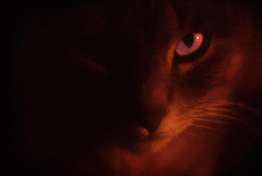 cat, with a sparkling eye