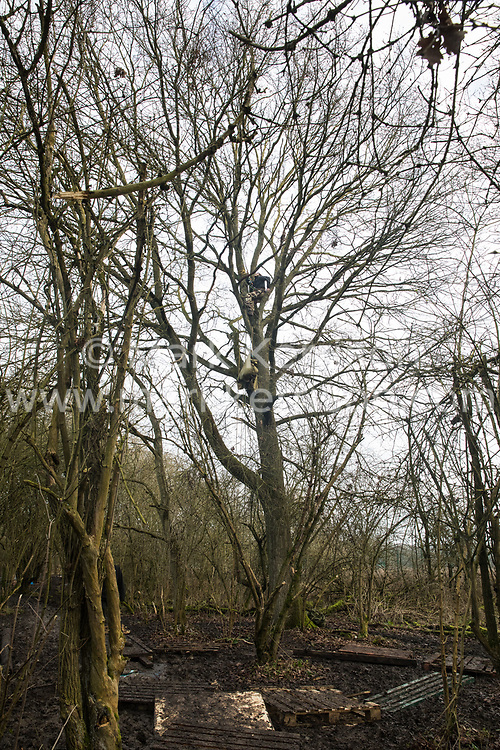 Harefield, UK. 20 January, 2020. Activists climb a tree at the Colne Valley wildlife protection camp. Extinction Rebellion, Stop HS2 and Save the Colne Valley had reoccupied the camp two days before as part of an ongoing attempt to protect ancient woodland threatened by the HS2 high-speed rail link after a small group of Stop HS2 activists had been evicted by bailiffs over the course of the previous two weeks. 108 ancient woodlands are set to be destroyed by the high-speed rail link.