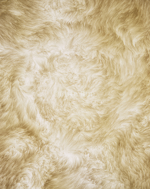 A yellowish fur background