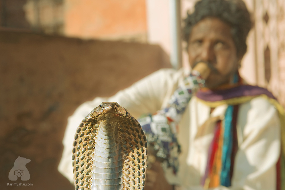A cobra charmer in Jaipur, Rajasthan India.