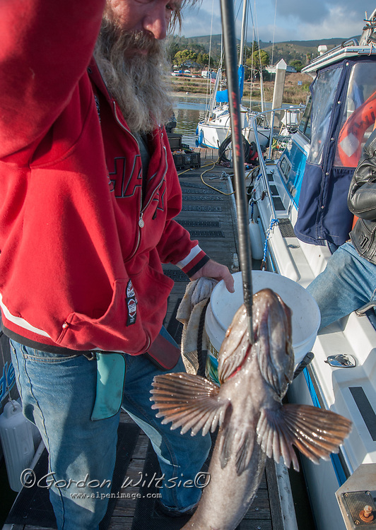 fisherman displays a ling cod he caught off the California Coast near Half Moon Bay.