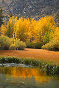 Peaceful Meadow in the High Sierras