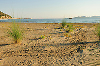 Many beaches along the Lykian Coast in Turkey are used for nesting by the Loggerhead Sea Turtle (Caretta caretta). The big tracks left on the beach bear witness to the nocturnal visit of an egg-bearing female.