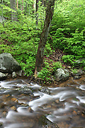 Spring rains fill the waters of the Hughes River located next to Old Rag Mountain and flowing through Madison and Rappahanock Counties in Virginia.  (Photo/Andrew Shurtleff)
