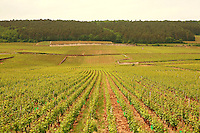 .vineyards  in Gevrey-Chambertin, , Burgundy..Photo by Owen Franken for the NY Times..May 27, 2008.