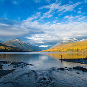 single woman standing on bowman lake fall larch reflecting golden colors
