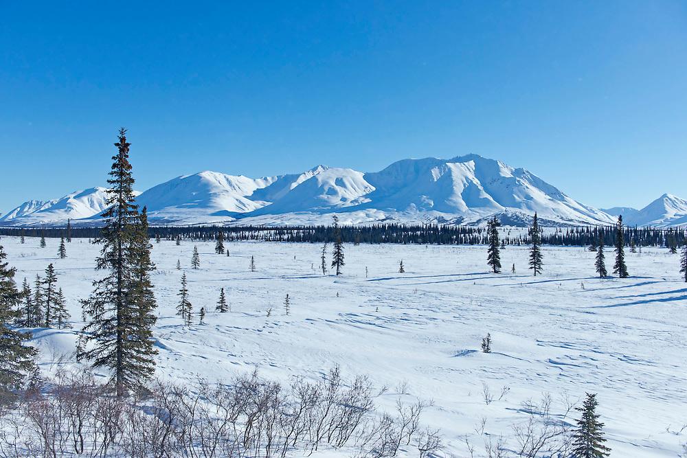 Winter landscape viewed from the Alaska Railroad