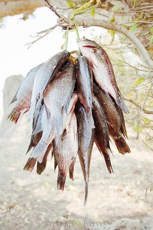 Freshly caught fish are hung to dry near the village of Seronga in the Okavango Delta, Botswana