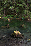 Spawning channel at Thompson Regional Park in the Chilliwack River Valley, Chilliwack, British Columbia, Canada.