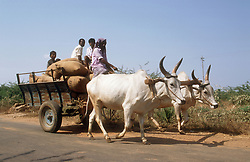 Two white oxen pulling a cart full of people and sacks,