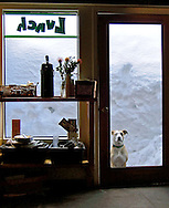 A patient dog waits in the snow outside a cafe - learn more about the story behind this image on the blog: https://goo.gl/ymvVZa