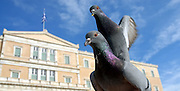 Capture the right moment!!! <br /> <br /> The symbol of Freedom in front of the Greek Parliament.
