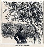 Jack Easy caught scrumping apples.  Illustration for 'Mr Midshipman Easy' by Captain Marryat.