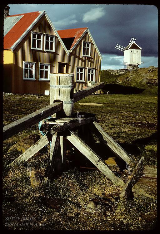 Pair of eider ducks share nest(an exception) near Vigur Island's farmhouse and windmill in June. Iceland