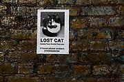 Lost Cat poster on brick wall, Camden, London, UK.