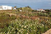 Traditional houses and gardens Villaverde village near Oliva, Fuerteventura, Canary Islands, Spain