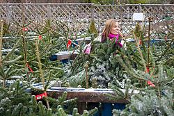Choosing a Christmas tree in a garden centre