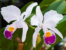 Kew Gardens Orchid Festival 7th February 2019