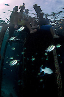 Kids on the dock play with reef fishes<br /> <br /> Shot in Indonesia