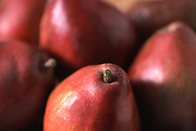 Close up selective focus photograph of some Red d'Anjou pears