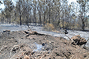 Israel, Carmel Mountains, Extinguished forest fire. The damage left