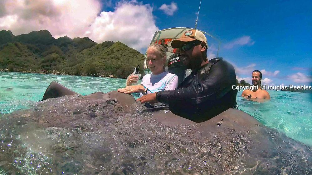 Swimming with sharks and Stingrays,Tiahura, Moorea, French Polynesia