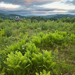 Ferns in Sabins Pasture in Montpelier, Vermont.